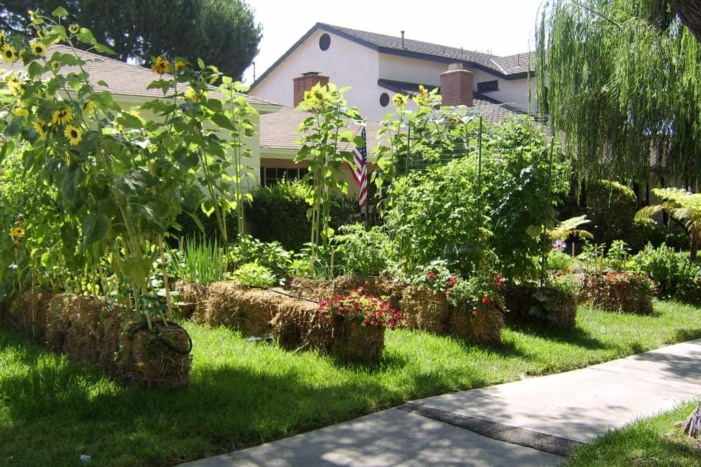 Imagine Turning Your Front Lawn Into A Vegetable Garden!