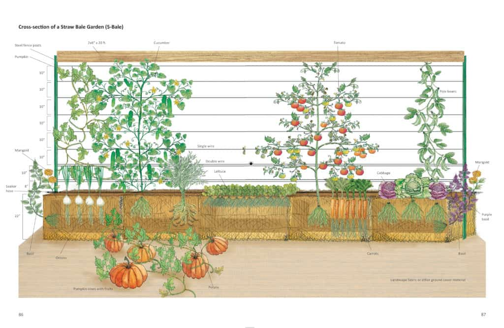One KEY To A Successful Straw Bale Garden Set Up Is The Wire Trellis Above  The