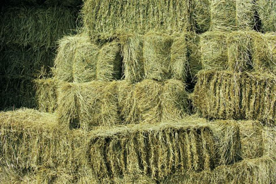 I can't find straw bales, can I use hay bales instead?