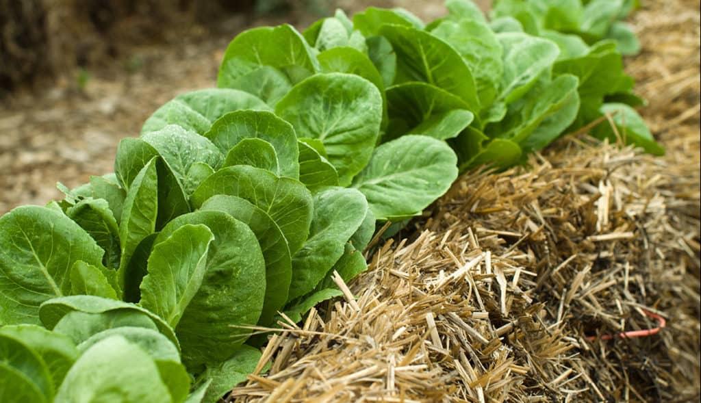 What is Straw Bale Gardening?