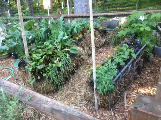 a garden in a bale of the many benefits of straw bale gardening one of the most popular is the back saving easier access some folks love it - Garden Hacks
