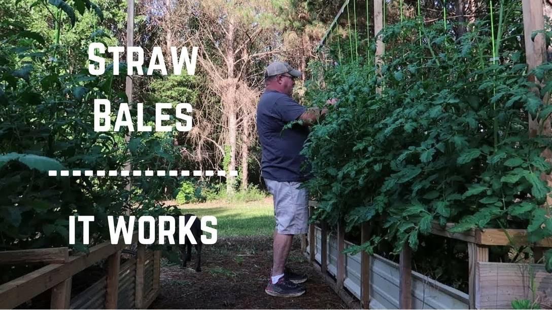 Straw Bale Gardening. It WORKS.